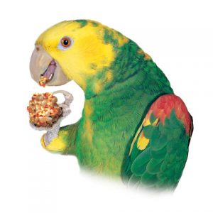 Parrots love Nutri-Berries